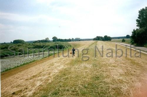 Sommer 2000 im Heisterbusch