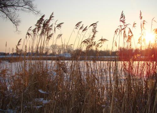 Winter 2010