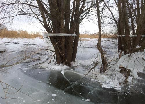 11.02.2012 - Eis an den Bäumen