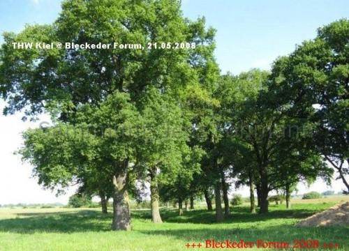Alte Eichen im Deichvorland am Heisterbusch