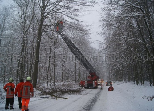 Schieringer Forst im Winter